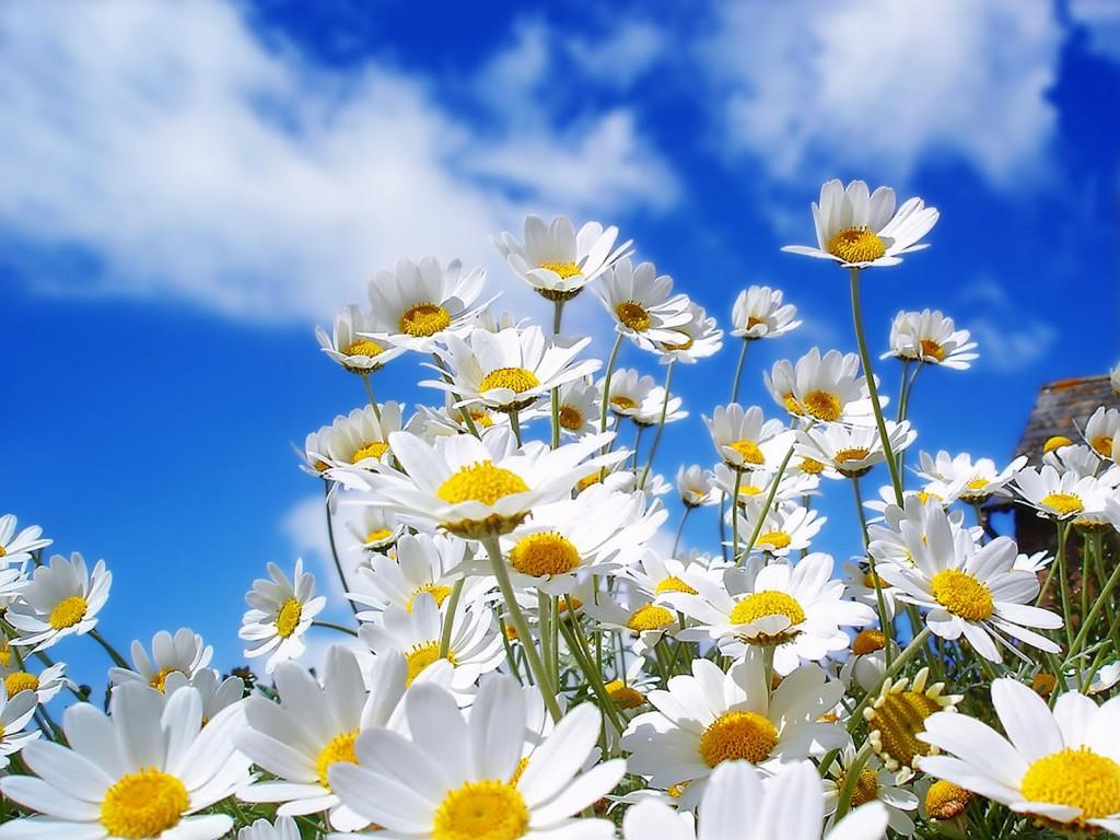Поздравляю всех с первым днем весны